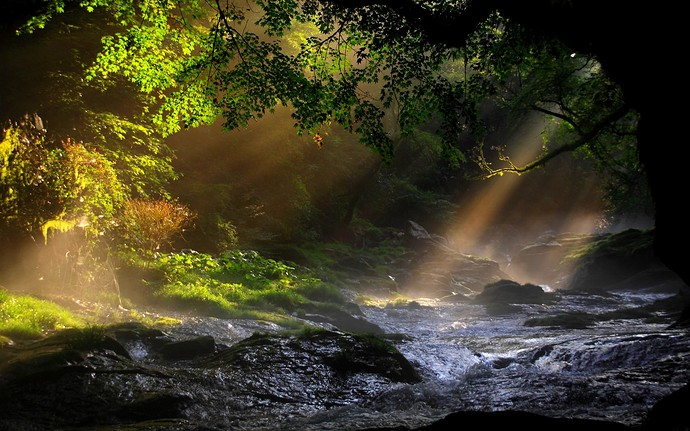 Forest-River